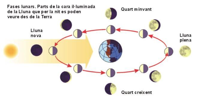 03 el sol i la lluna for Que fase lunar hay hoy