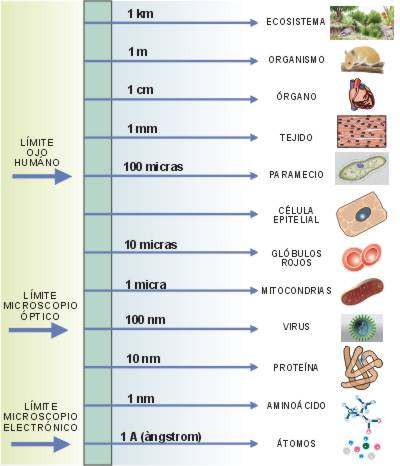 cèl. tejidos, órganos, aparatos