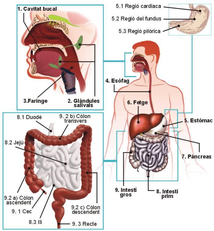 Hospitales que me puedo tomar para quemar la grasa del abdomen tratamiento para sobrepeso